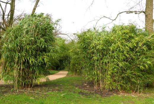 Bambus am Weg
