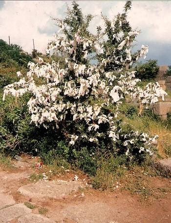 Baum auf Zypern, an dessen Äste Tücher geknotet sind.