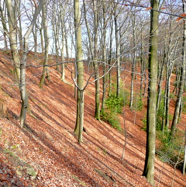 Bäume und ihre Schatten am Steilhang!