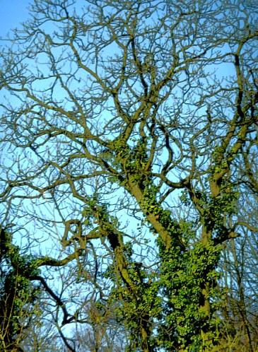 Den Baumwipfeln nahe
