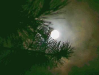 Mond in Kiefer