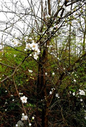 Blüten, klein, weiß u. fünfblättrig