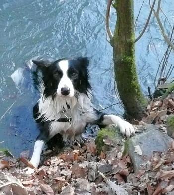Hund, der ans Ufer klettert