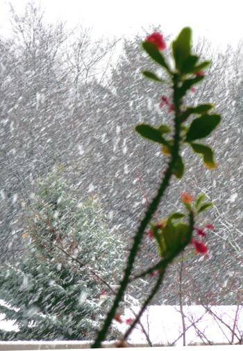 Dichter Schneefall