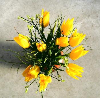 tulpen-gelb-im-sonnenlicht.jpg