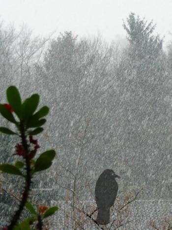 Rabe im Schneefall!