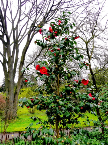 Kahler Baum über grünem Strauch mit roten Blumen!