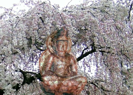 Buddha in Kirschblüten!