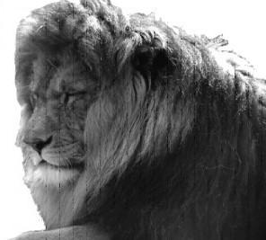 Löwe als Symbol für den Löwenthron!