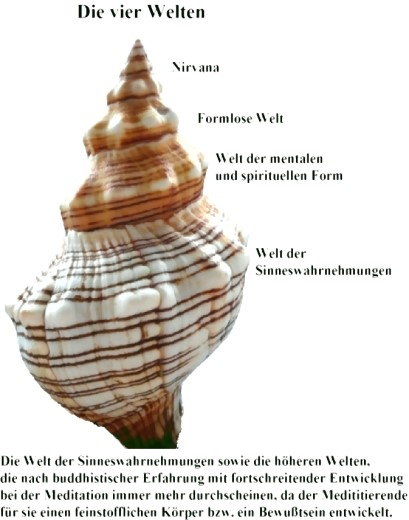 Eine Muschel als Symbol der vier Welten im Buddhismus!