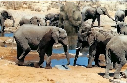 Elefanten am Wasserloch in Namibia mit Hütergeist!