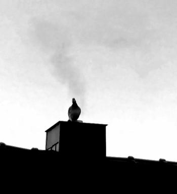 Wildtaube hüllt sich in Rauchfahne!