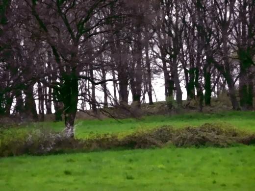 Hügel hinter der Kapelle mit Kreuzung geomantischer Zonen!