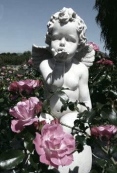Der Duft von Jasmin, Rosen und Veilchen!