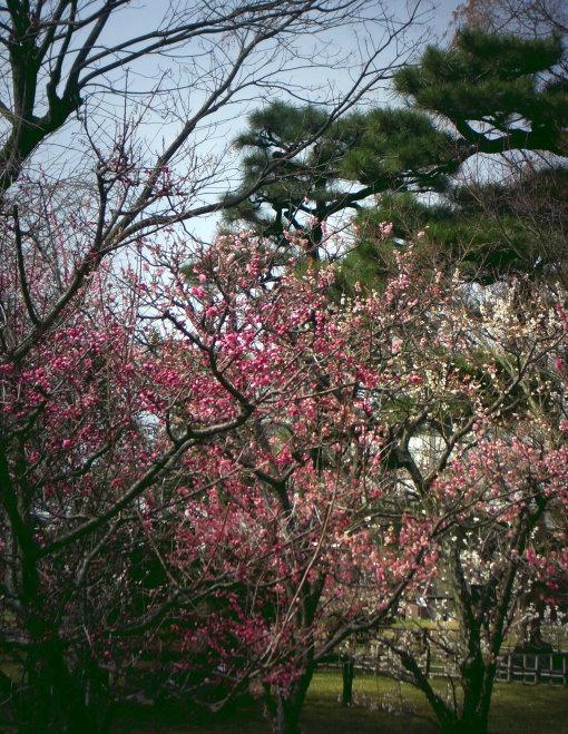 Im Pflanzen-Garten des Ryoan-ji!
