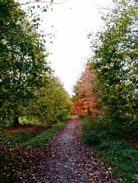 Ansteigender Weg im Herbst!