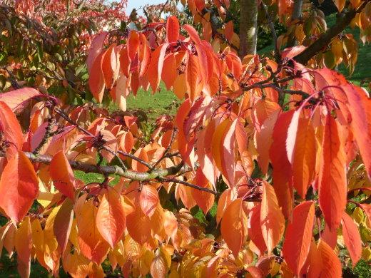 Herbst-Laub!