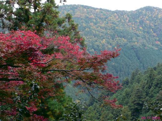 Blick in die Berglandschaft vom Haupttempel auf dem Kurama-Yama aus (eigenes Foto vom 09.11.08!)