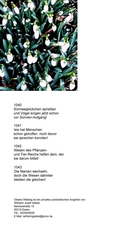 1-a-a-a-a-schneeglockchen-haikus-ok.jpg