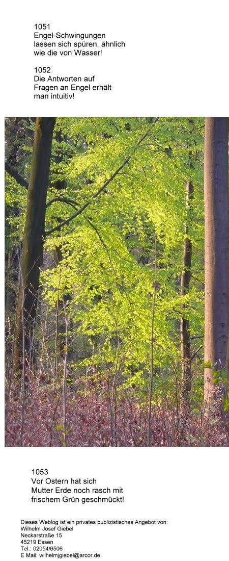 Der Wald wird grün, Aufnahme von Karfreitag 2009