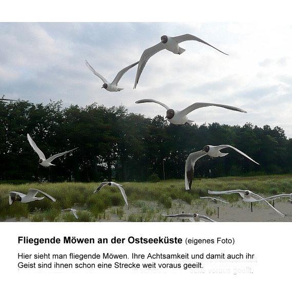 4-achtsamk-fliegende-mowen-m-text-ok.jpg