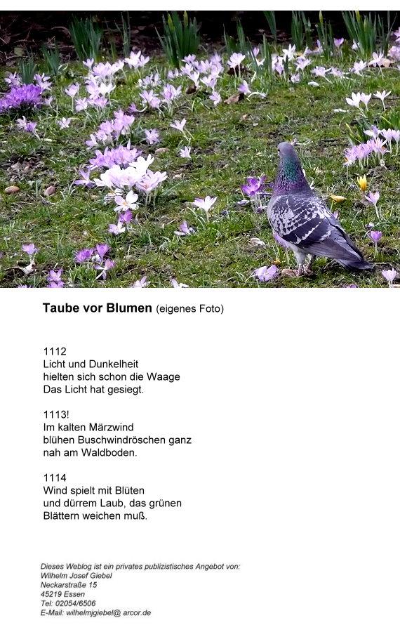 14-taube-vor-blumen-haikus.jpg