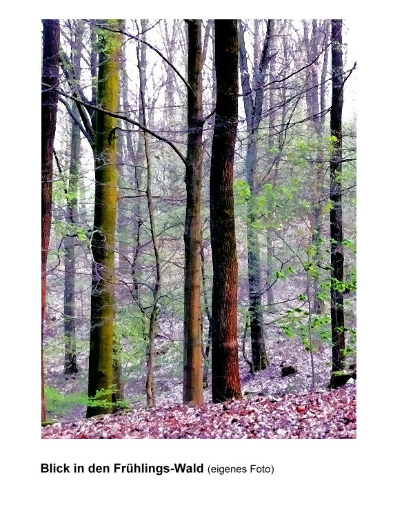 16-blick-in-den-fruhlingswald.jpg