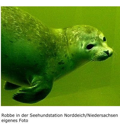 1017-robbe-in-der-seehundstation-norddeich-niedersachsen.jpg