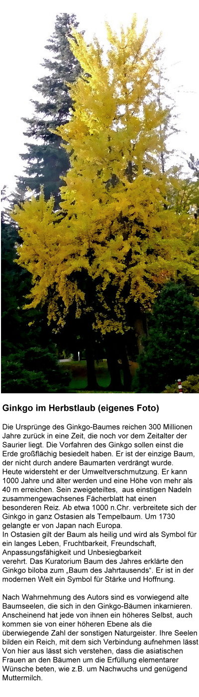 1029-ginkgo-im-herbstlaub.jpg