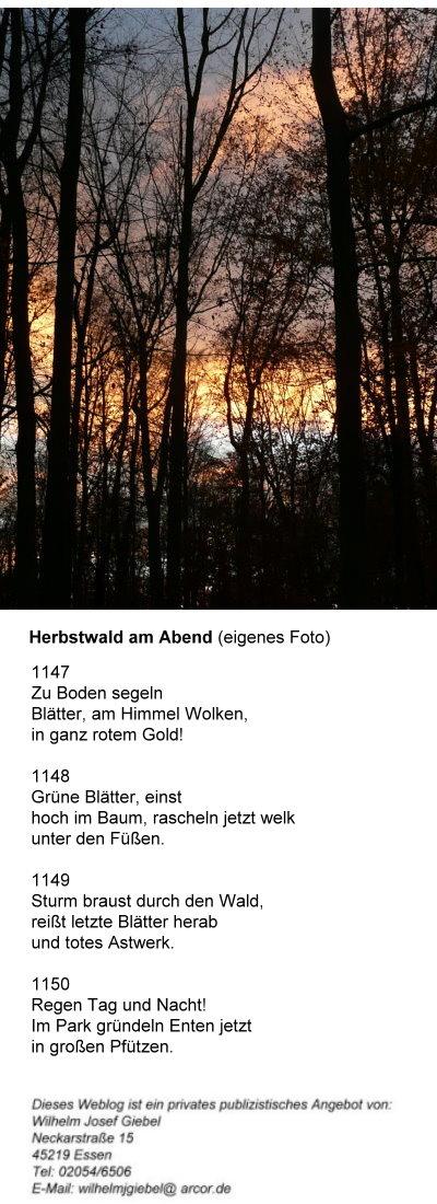 1032-herbstwald-am-abend-haiku.jpg