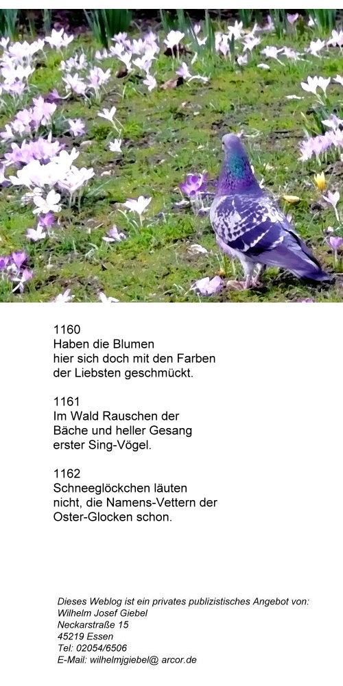1060-fruhlings-blumen-mit-den-farben-der-liebsten.jpg