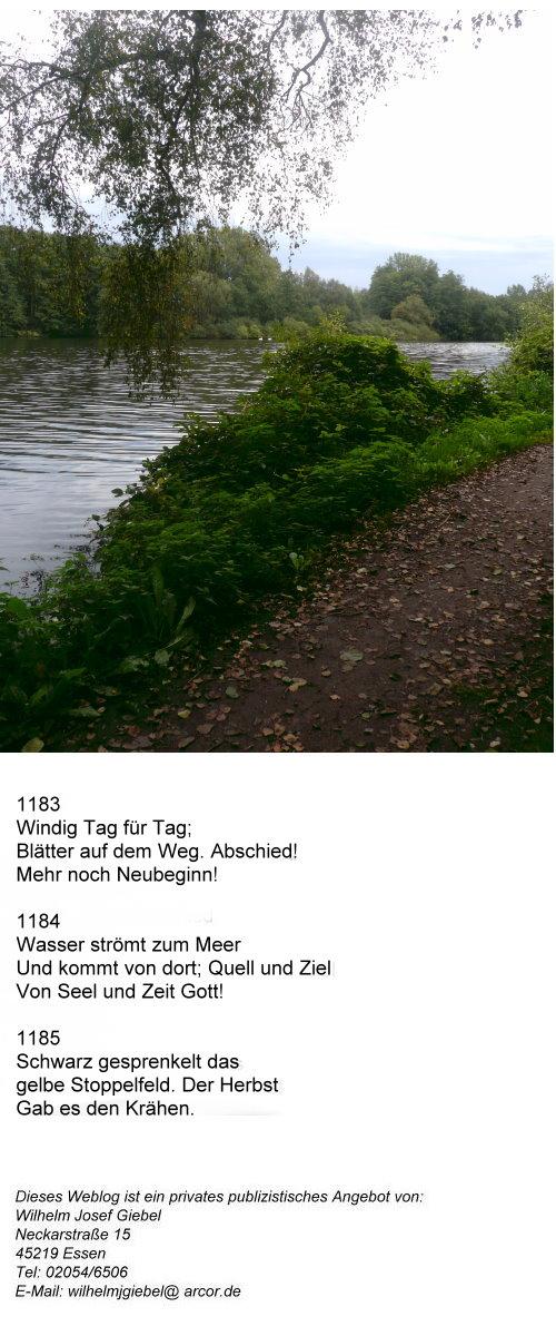 gottlicher-stolz-iv-herbstblatter-auf-dem-weg-am-fluss-eigenes-foto.jpg
