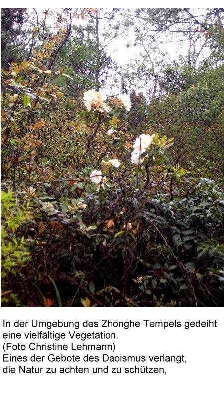 dao-1-vegetation-in-der-umgebung-des-zonghe-tempels.jpg