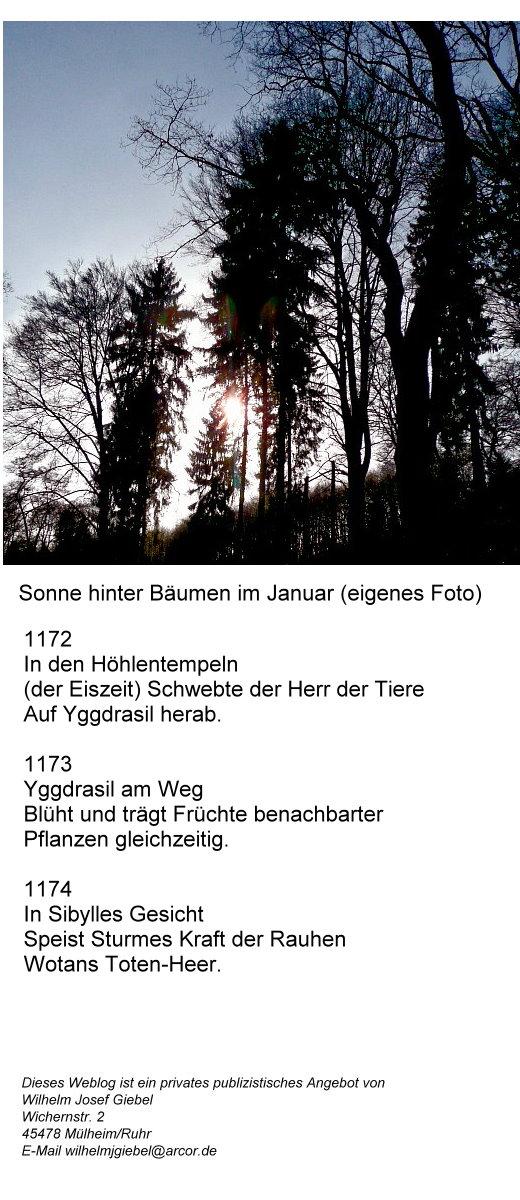 weihnacht-ii-sonne-hinter-baumen-im-januar.jpg