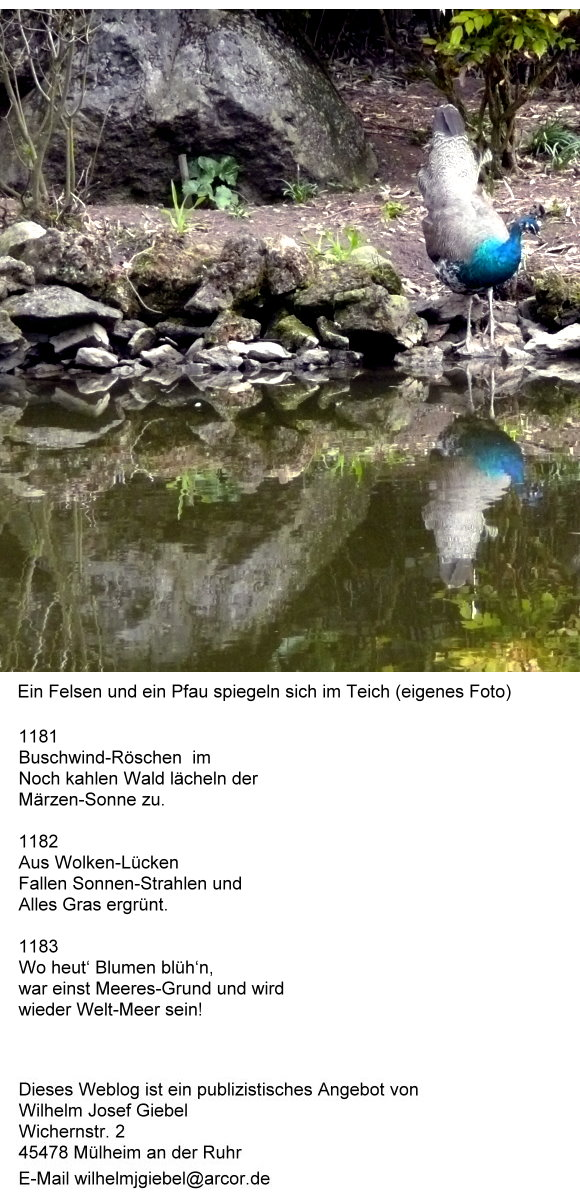 dao-12-ein-felsen-und-ein-pfau-spiegeln-sich-im-teich.jpg