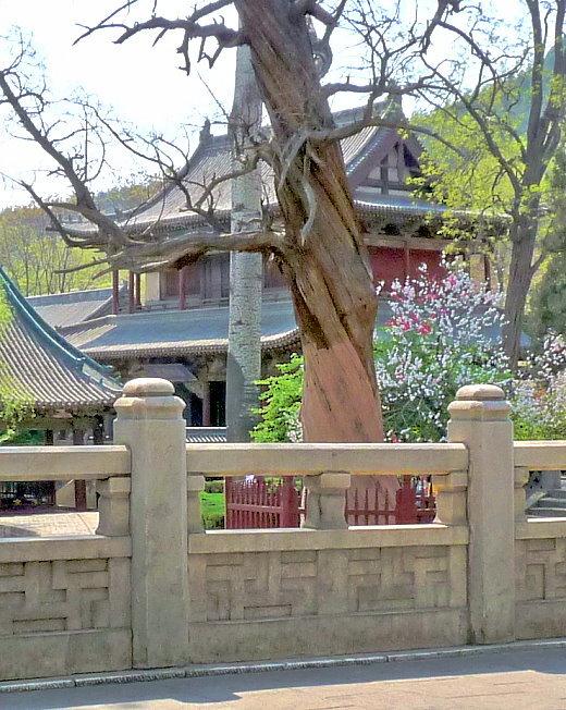 dao-16-halle-der-wassergottin-im-jinci-tempel.jpg