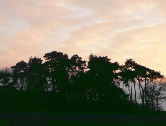 Abendstimmung im Winter über einem Kiefernwäldchen
